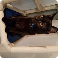 Adopt A Pet :: Mason - Geneseo, IL