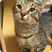 Adopt A Pet :: Hatch - Monroe, GA