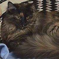 Adopt A Pet :: Annalise - Bartlesville, OK