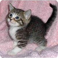 Adopt A Pet :: Marlo - Richmond, VA