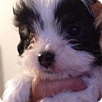 Adopt A Pet :: MATSON - Mission Viejo, CA