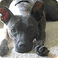 Adopt A Pet :: Sprite - Hamilton, ON