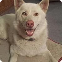 Adopt A Pet :: Keibou - Seattle, WA