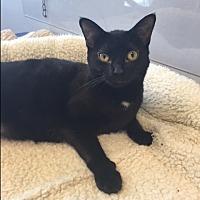 Adopt A Pet :: Mondo - Jupiter, FL