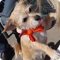 Adopt A Pet :: Jolie - Pierrefonds, QC