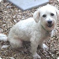 Adopt A Pet :: Percy-MEET ME -Happy Go Lucky - Norwalk, CT