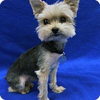 Adopt A Pet :: Theodore - Encino, CA