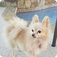 Adopt A Pet :: Sunrise - conroe, TX