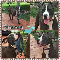 Adopt A Pet :: Grayson - Homestead, FL
