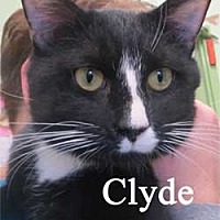 Adopt A Pet :: Clyde - Warren, PA