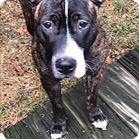 Adopt A Pet :: Marlee - Groton, CT