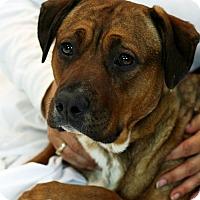 Adopt A Pet :: Rin Tin - Santa Maria, CA