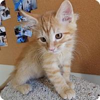 Adopt A Pet :: Bubbles - Lenexa, KS