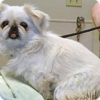 Adopt A Pet :: Cutie - Wildomar, CA