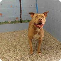 Adopt A Pet :: URGENT on 3/31 SAN BERNARDINO - San Bernardino, CA
