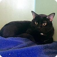 Adopt A Pet :: Vader - Philadelphia, PA