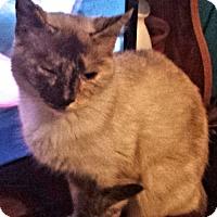 Adopt A Pet :: Little Miss Yelton - Fredericksburg, VA