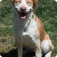 Adopt A Pet :: Griffin - Patterson, CA