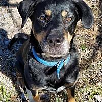 Adopt A Pet :: Duke - Essington, PA