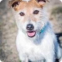 Adopt A Pet :: Jax - Cheyenne, WY