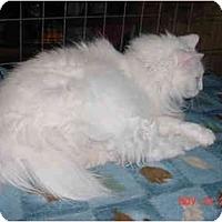Adopt A Pet :: Snow White - Pendleton, OR