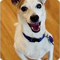 Adopt A Pet :: Frankie in Lafayette - Houston, TX
