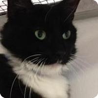 Adopt A Pet :: Luke - Winter Haven, FL