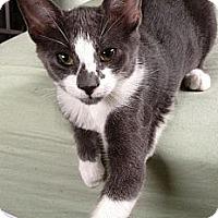 Adopt A Pet :: George - Vero Beach, FL
