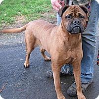 Adopt A Pet :: Abby - Roy, WA