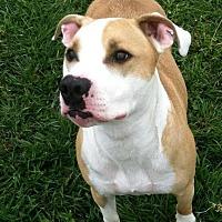 Adopt A Pet :: Raja - Idaho Falls, ID