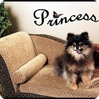 Adopt A Pet :: Princess (senior) - Dallas, TX