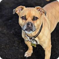 Adopt A Pet :: Buster - Dillsburg, PA