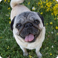 Adopt A Pet :: Willard - Drumbo, ON