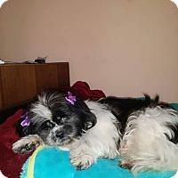Adopt A Pet :: Bebe (aka Beba) - San Diego, CA
