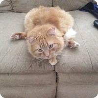 Adopt A Pet :: Donner - Mount Laurel, NJ