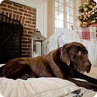 Adopt A Pet :: Moose - Warrington, PA