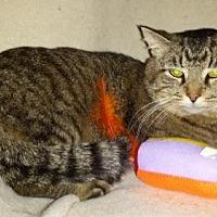 Adopt A Pet :: Chubbs - Iroquois, IL