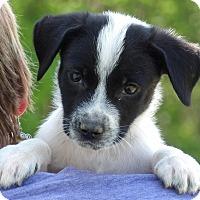 Adopt A Pet :: Lander (6 lb) Video - Sussex, NJ