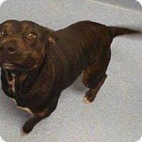 Adopt A Pet :: Princess - Gainesville, FL