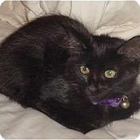 Adopt A Pet :: Oksana - Franklin, NC