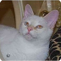 Adopt A Pet :: Tanner - Modesto, CA