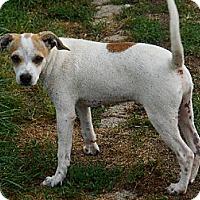 Adopt A Pet :: Butch - Zaleski, OH