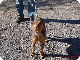 Doberman Pinscher Mix Dog for adoption in Golden Valley, Arizona - Dover