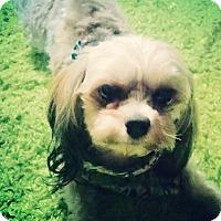 Adopt A Pet :: Ferran - Beechgrove, TN