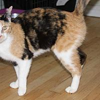 Adopt A Pet :: Ming - Torrance, CA