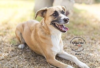 German Shepherd Dog/Cattle Dog Mix Dog for adoption in Inland Empire, California - MAX