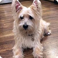 Adopt A Pet :: Silas - Atlanta, GA
