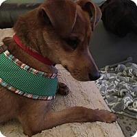 Adopt A Pet :: Red Man - Doylestown, PA