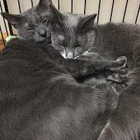 Adopt A Pet :: Aline - Bayonne, NJ