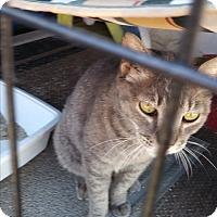 Adopt A Pet :: Kiwi - Glendale, AZ